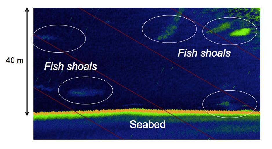 Fish_shoals