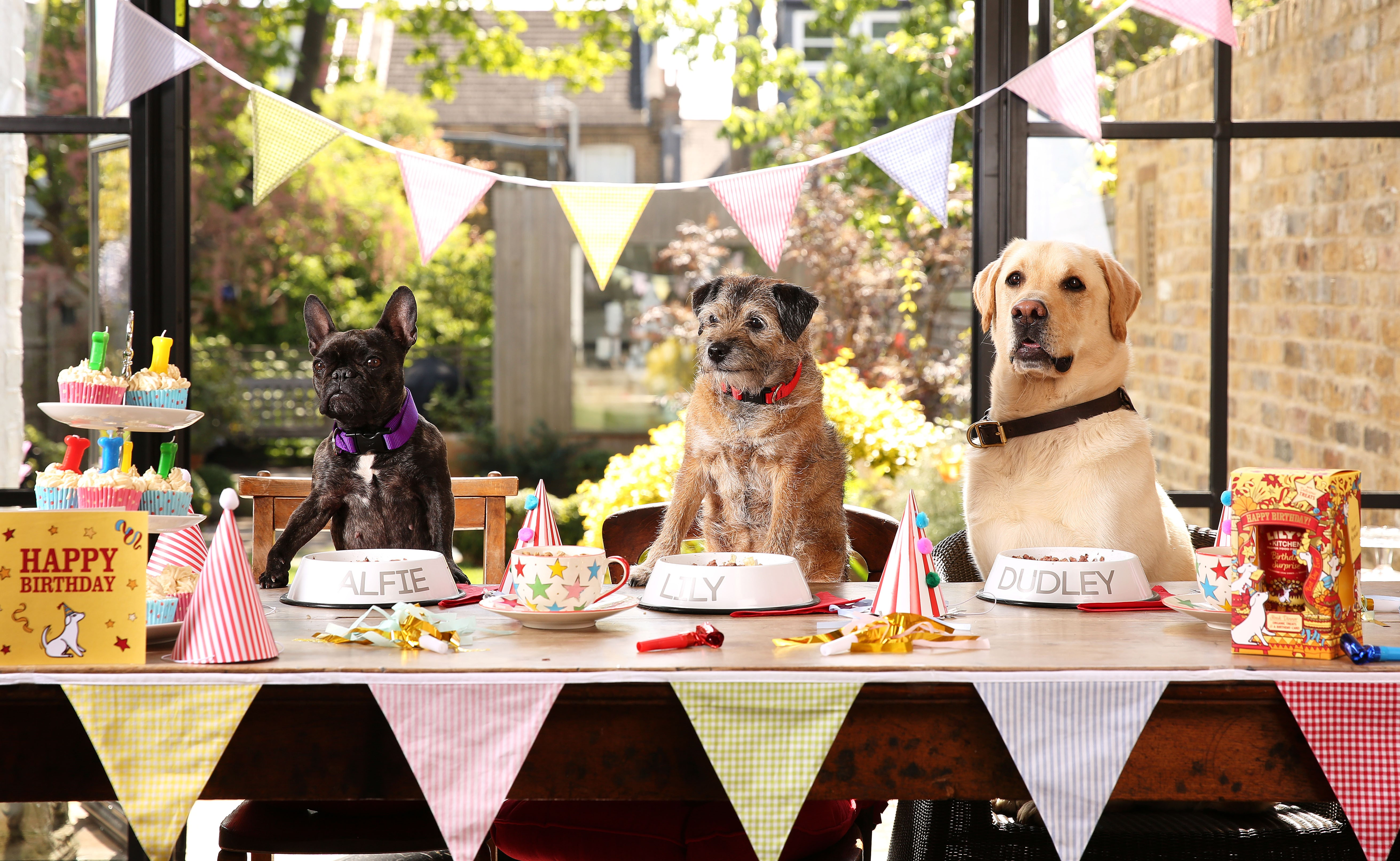 Children Arent The Only Ones Being Lavished With Extra Special Birthday Celebrations As New Research Reveals 75 Of Pet Owners Celebrate Their Dogs